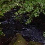 糸川の清流